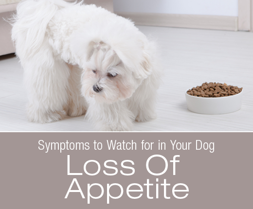 Symptoms To Watch For In Your Dog: Loss Of Appetite