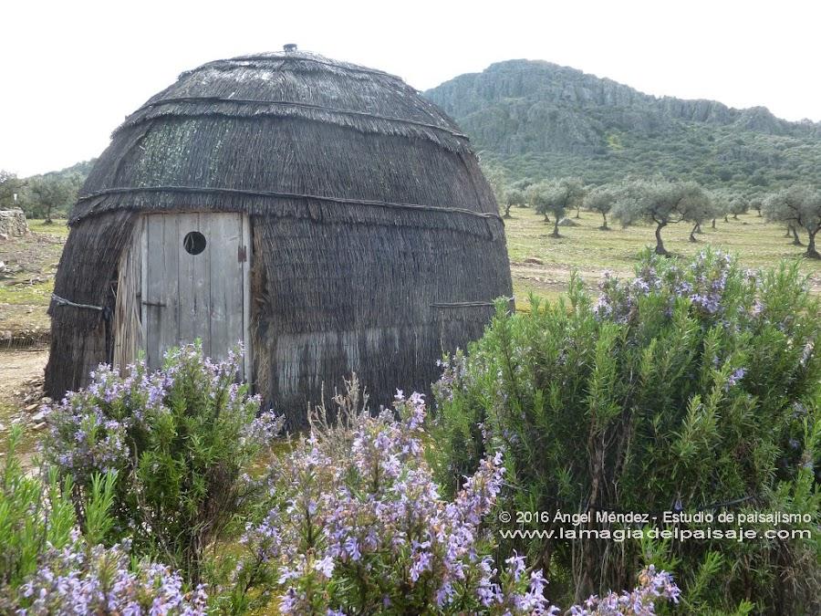 Plantación de Rosmarinus officinalis, Casa Rural Sierra del Mampar, Hornachos (Badajoz)
