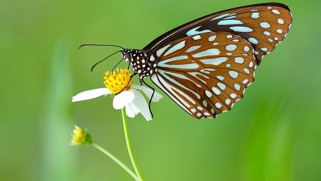 Kemenuh Butterfly Park Tourist Spot - Bali, Kemenuh, Village, Butterfly Park, Butterfly Garden, Attractions, Gianyar, Sukawati
