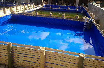 contoh konstruksi kolam terpal budidaya ikan gurami