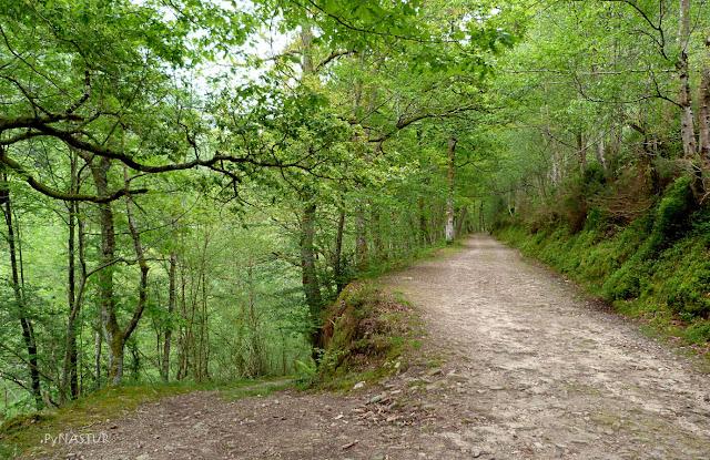 Bosque del Río Infierno - Piloña