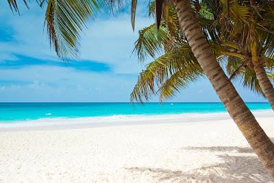 Foto på en strand och palmer