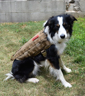 Tactical MOLLE customizable dog harness