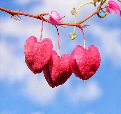 valentine-day-flower