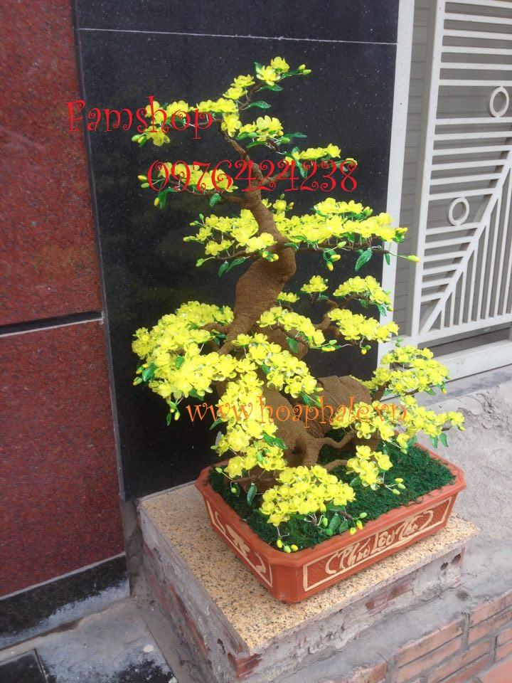 Goc bonsai mai dao cay hoa mai tai Nguyen Huy Tu