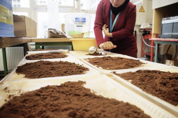 Xícaras biodegradáveis feitas de grão de café torrado