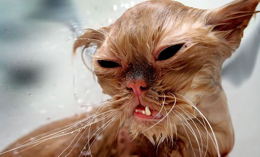 funny-wet-cats-17