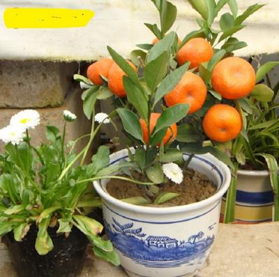 что вырастет с семян с aliexpress