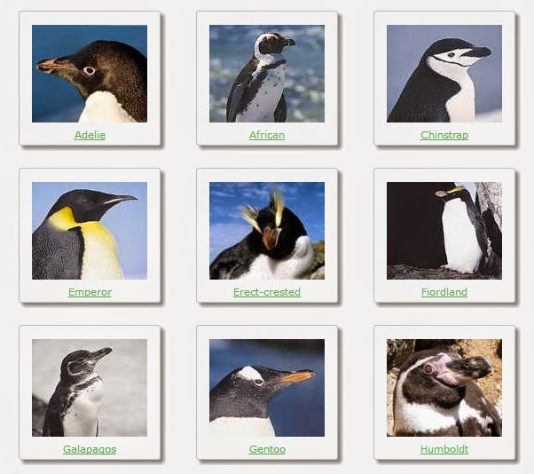 penguin species