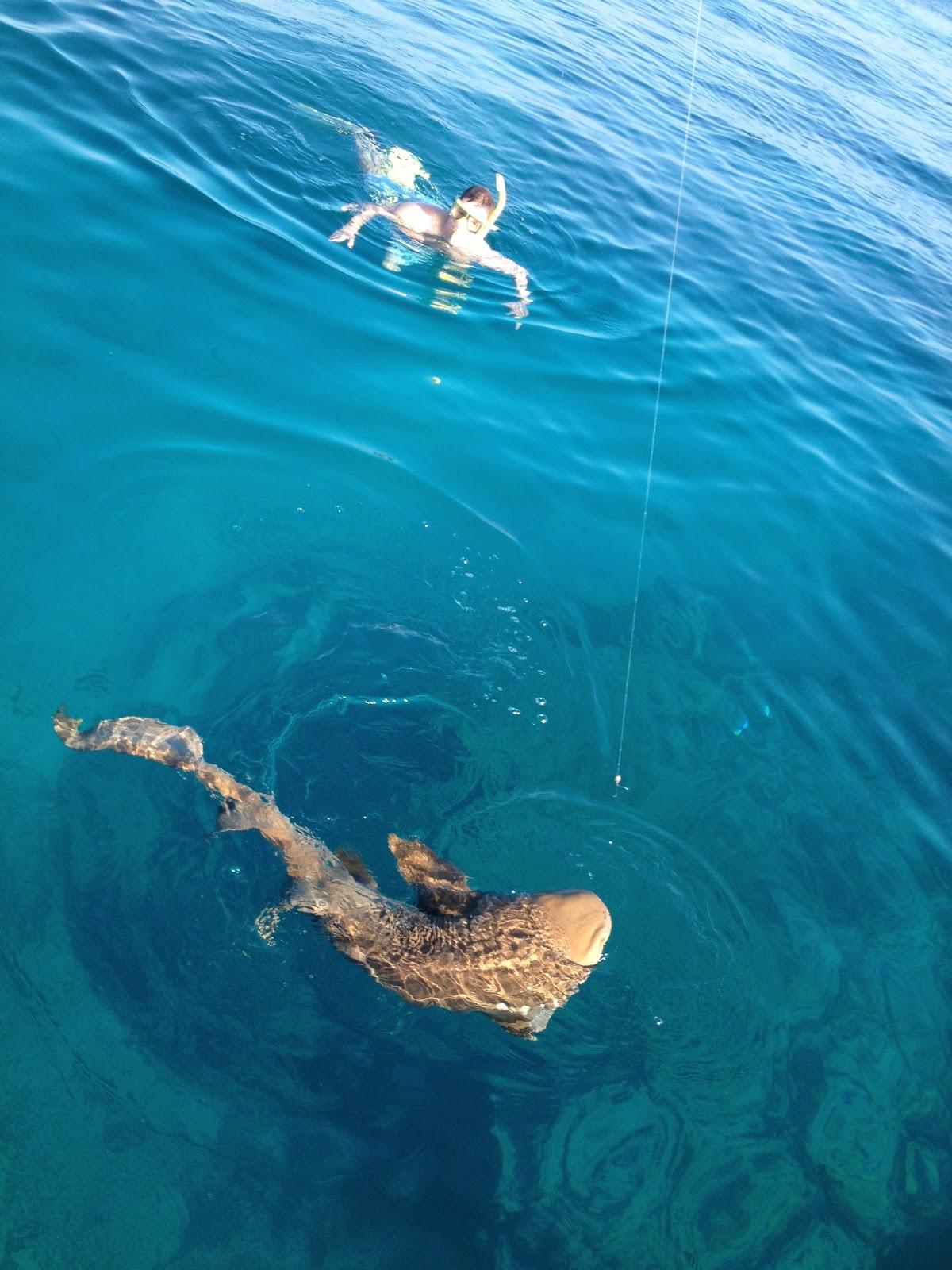 Snorkel Fish Combo, Key West