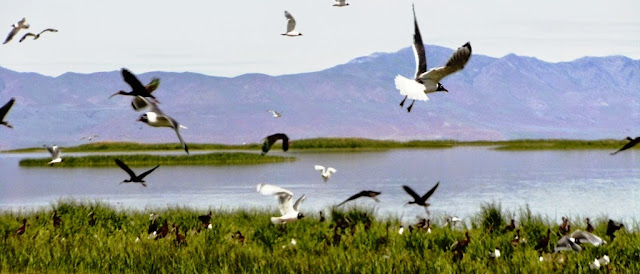 Wildlife at The Great Salt Lake