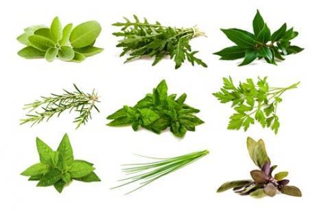 Hierbas aromáticas para tener en casa