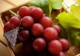 anggur ruby roman per butirnya bisa mencapai 5 juta rupiah