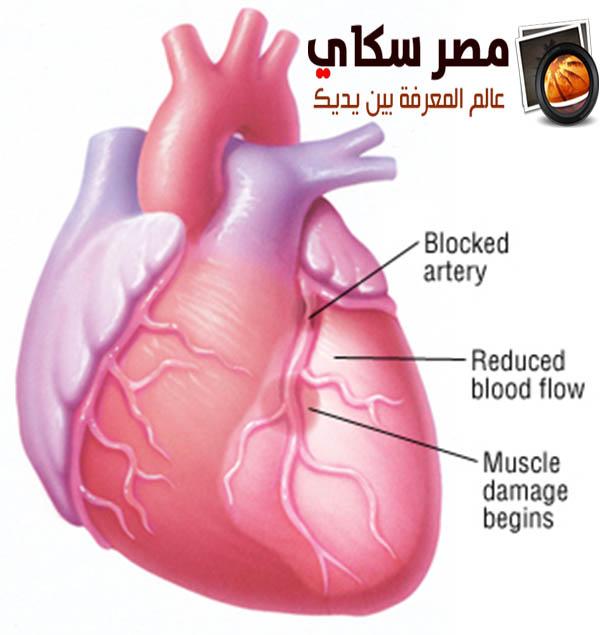 تعرف على الأسباب التى تضعف عضلة القلب Myocardial