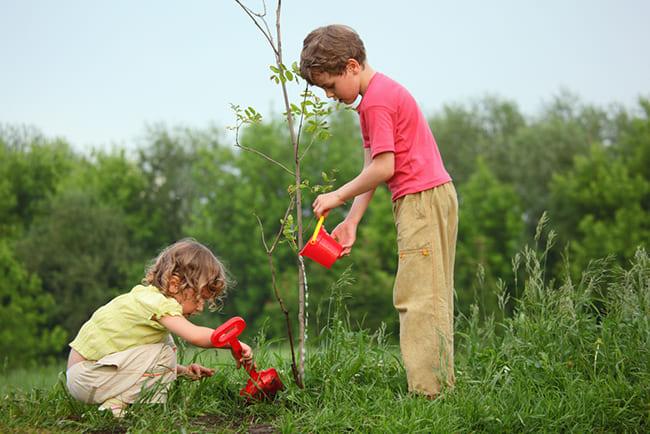 educación en valores medio ambiente
