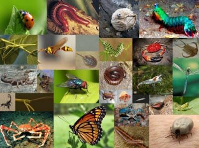 Pengertian, Karakteristik dan Klasifikasi Arthropoda