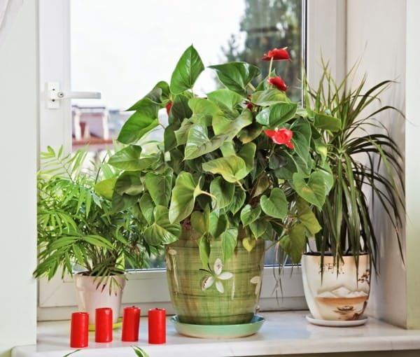 gambar tanaman hias dekat jendela