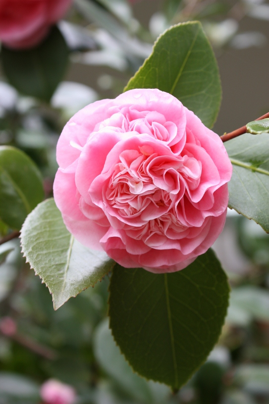 Old Fashioned Flower Of The Season Winter 2017