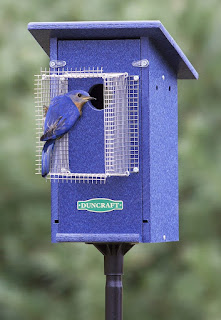 Pretty Blue Home Bluebird