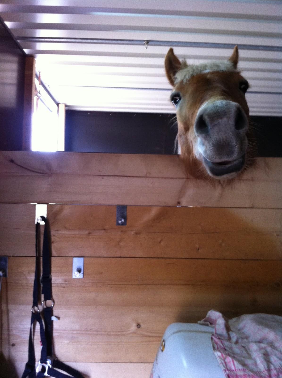 mein weg zum traumpferd: ikea im stall