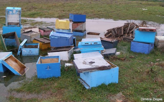 Μου έκλεψαν 13 μελίσσια και οι κλέφτες βρέθηκαν: Η μαρτυρία του μελισσοκόμου Θοδωρή...
