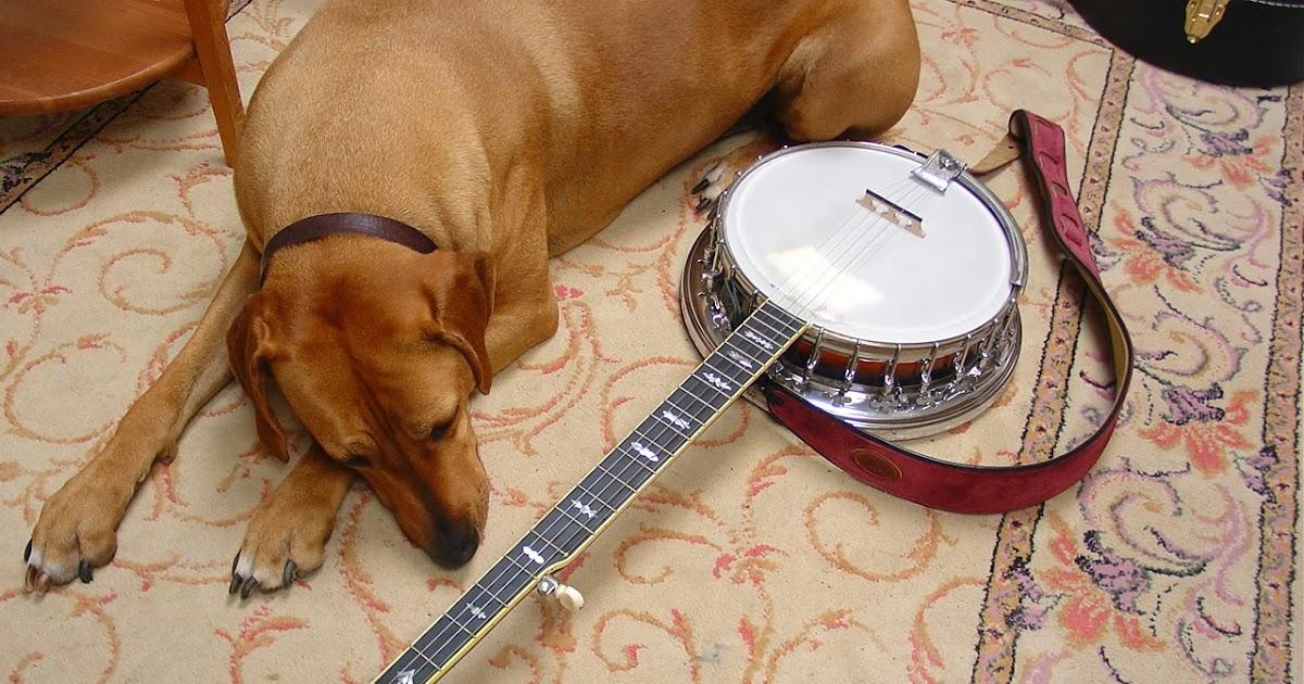 Little Bear Banjo Blog: My Banjos, My Banjo Collection, and My Banjo