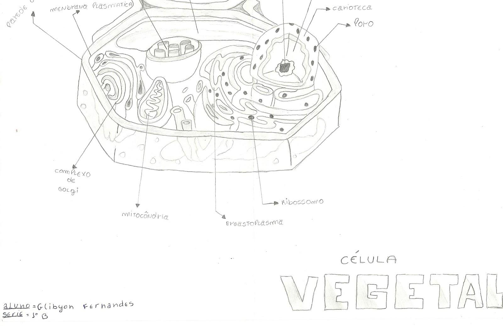 Rosabio Desenhos De Celulas Animal E Vegetal