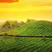 Munnar – Perfect for a romantic honeymoon Kerala
