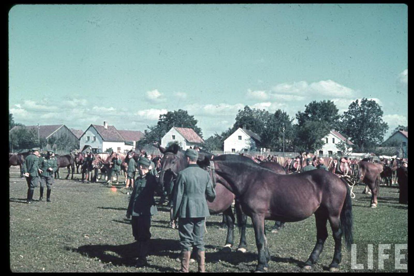horse deutsch