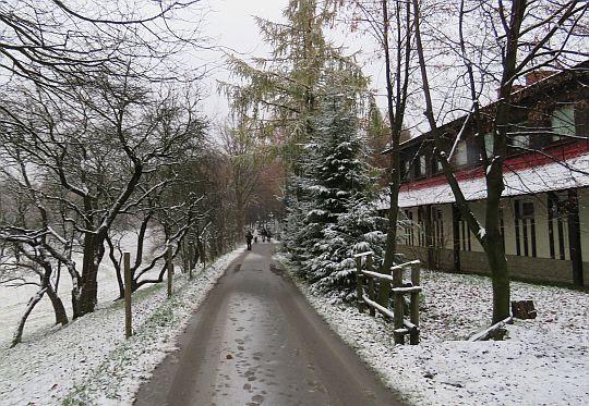 Droga w Jamnej.