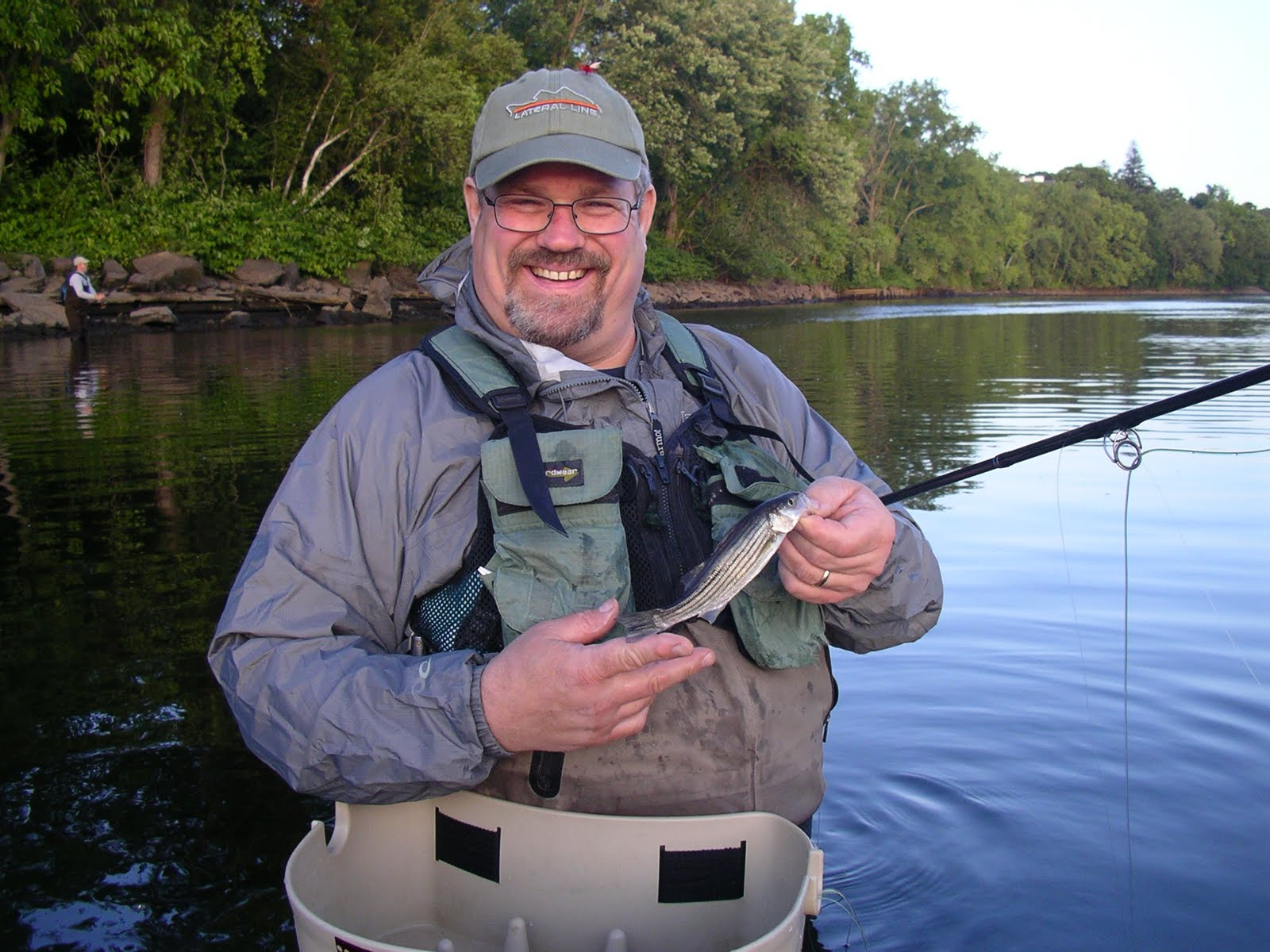 Bear Stripers tight lines fly fishing: stripers reproducing in the housatonic?