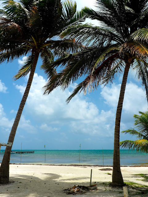 Palm trees and beach on Caye Caulker, Belize