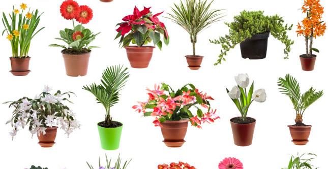 7 Piante Che Attraggono Energia Positiva A Casa Vita E Benessere News
