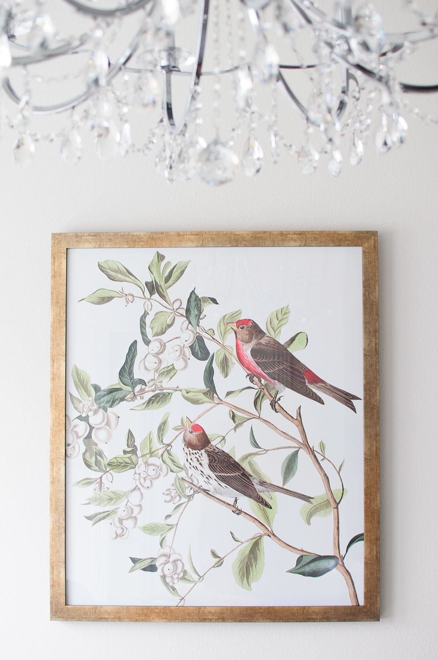 Large audubon bird print in a gold frame