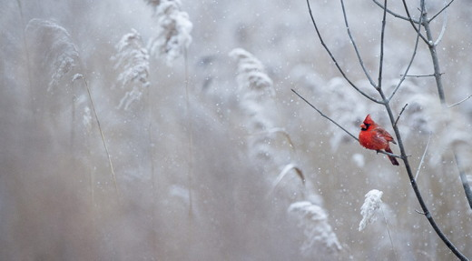 https://nuestropandiario.org/2018/12/nieve-invernal/