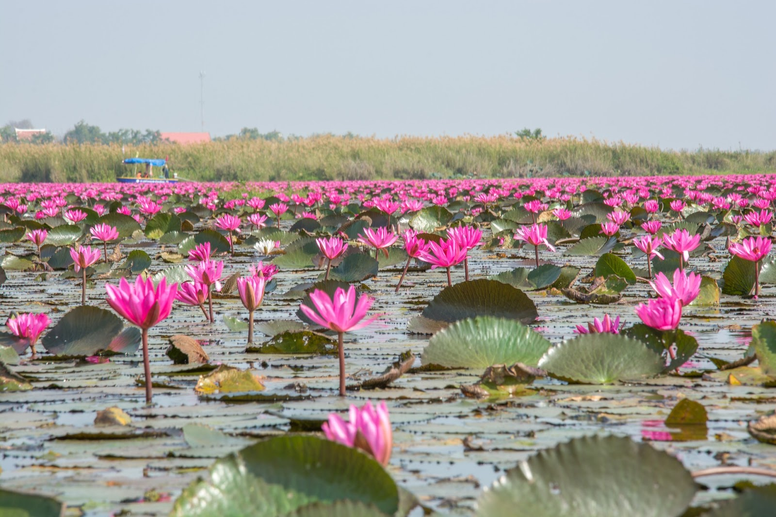 The Jewel Is In The Lotus Grow And Succeed