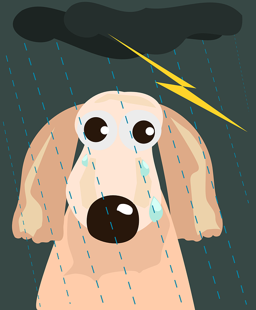 Thunderstorms, Fireworks and Dogs, Oh My!