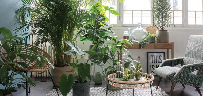 piante da appartemento resistenti