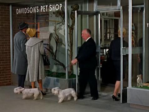 El cameo de Alfred Hitchcock en Los pájaros - Cine de Escritor