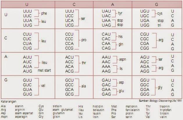 Hasil gambar untuk kode genetik