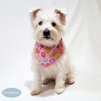 Valentines Day Dog Bandanas & Pet Ruffles
