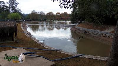 Construção do muro de pedra em Cotia-SP, sendo muro de pedra em volta do lago para evitar desmoronamento do barranco, sendo o muro com pedra rachão.