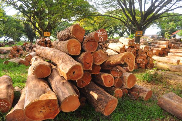 Papua Forest Watch Pertanyakan Terhentinya Proses Hukum Illegal Logging