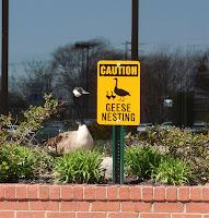 Nesting sign
