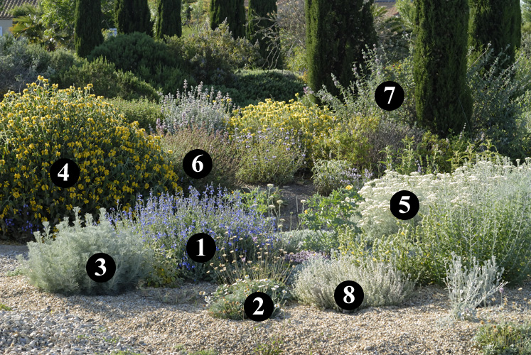 Planting Design For Dry Gardens By Olivier Filippi