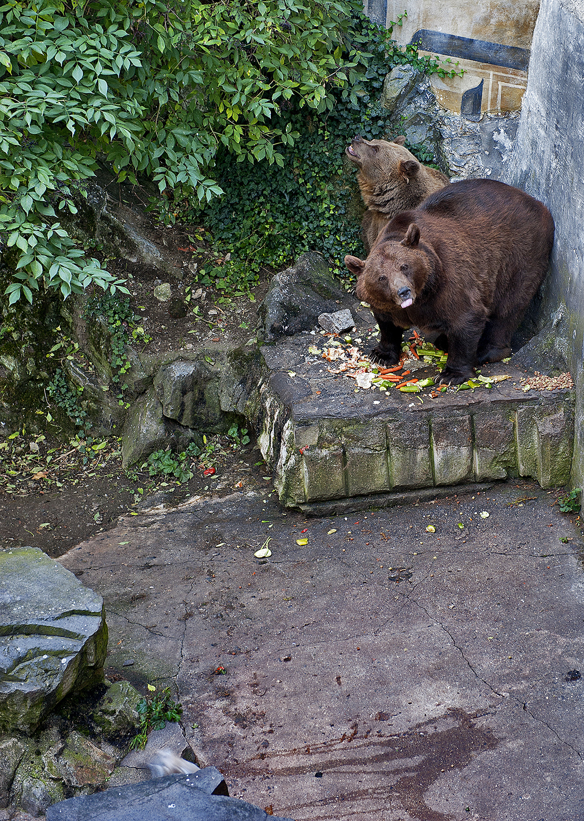 Český Krumlov, Czech Republic, moat bears, bear