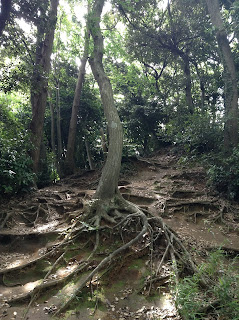 Kamakura Hiking Trail