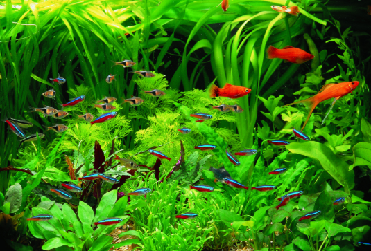 Image result for low light aquarium plants