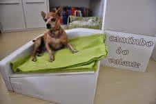 cama inclinada para cães