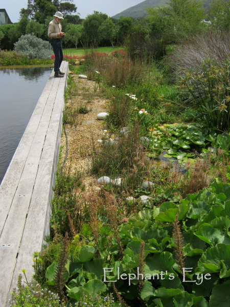 Ecopool with its wetland filter